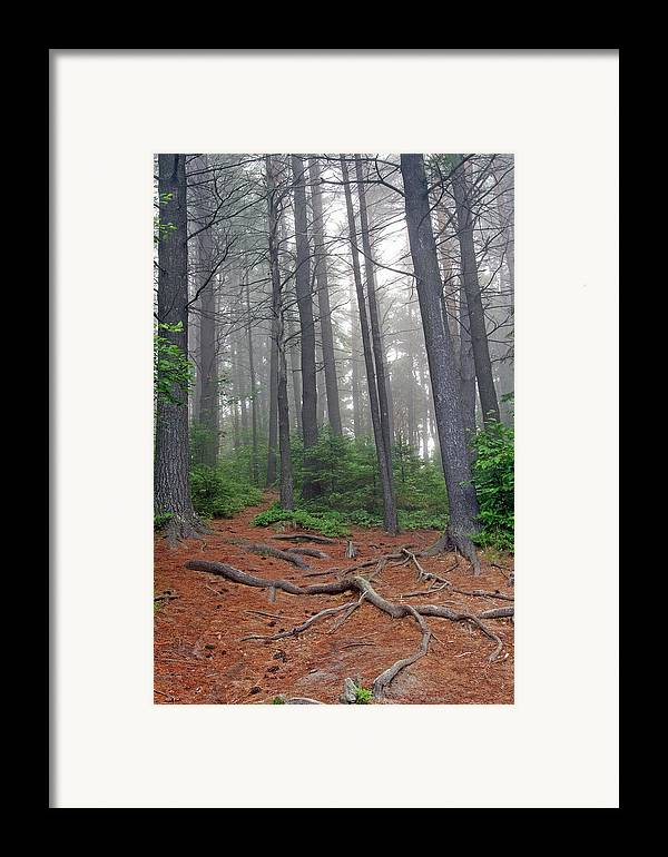 Ontario Framed Print featuring the photograph Misty Morning In An Algonquin Forest by Peter Pauer
