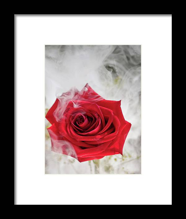 Beautiful Framed Print featuring the photograph Misty Rose by Jim DeLillo