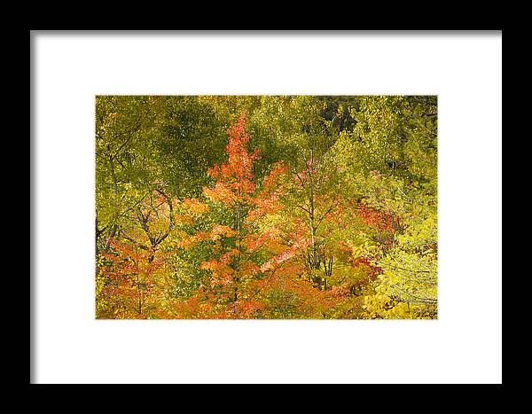 Tree Framed Print featuring the photograph Mixed Autumn by Phill Doherty