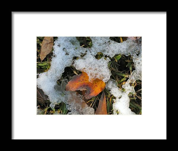 Winter Framed Print featuring the photograph Mixed Seasons - Taking Cover by Camera Candy