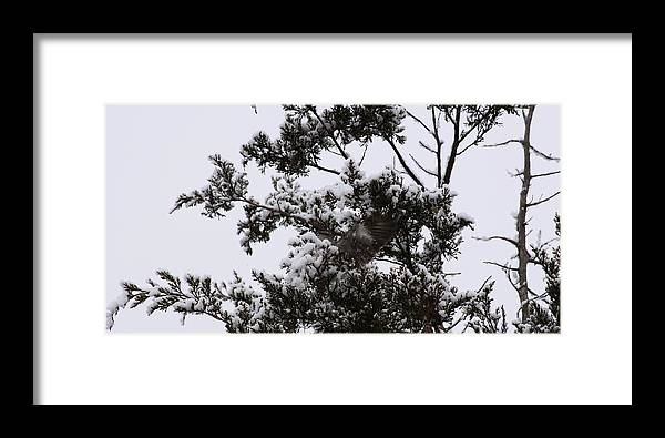 Wildlife Framed Print featuring the photograph Mocking Bird Greeting 2 by Daniel Childs