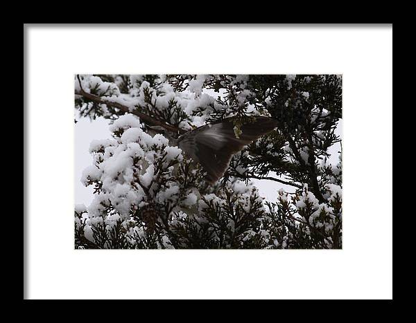 Wildlife Framed Print featuring the photograph Mocking Bird Greeting by Daniel Childs
