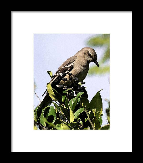Birds Framed Print featuring the photograph Mockingbird On Berries by Ellen Lerner ODonnell