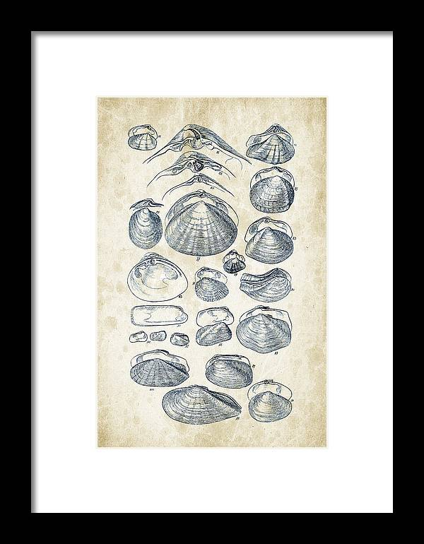 Molluscs Framed Print featuring the digital art Mollusks - 1842 - 04 by Aged Pixel