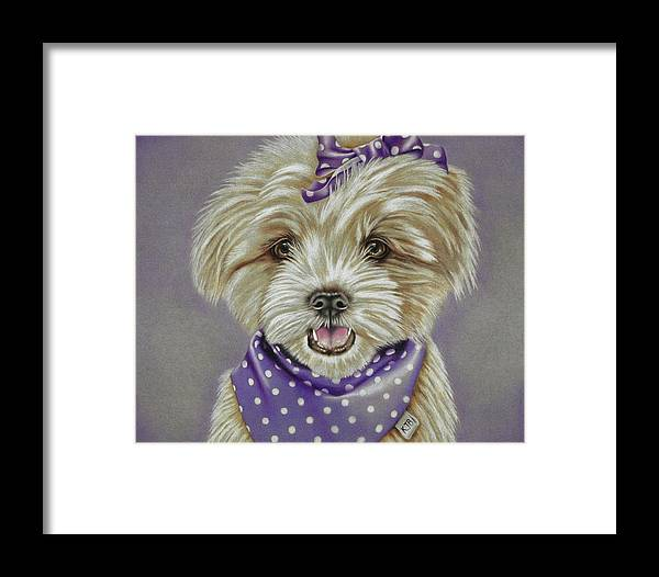 Dog Framed Print featuring the drawing Molly The Maltese by Karrie J Butler