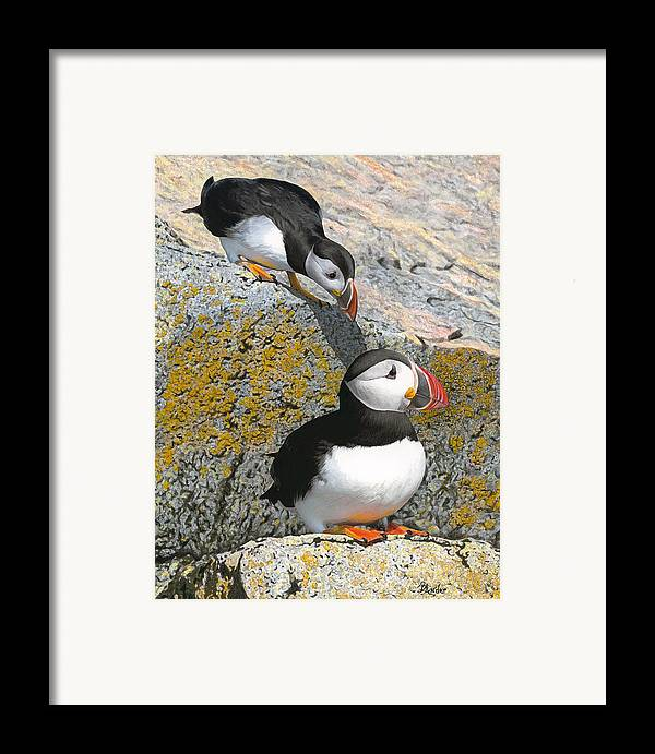 Birds Framed Print featuring the drawing Mom Watch Me by Brent Ander