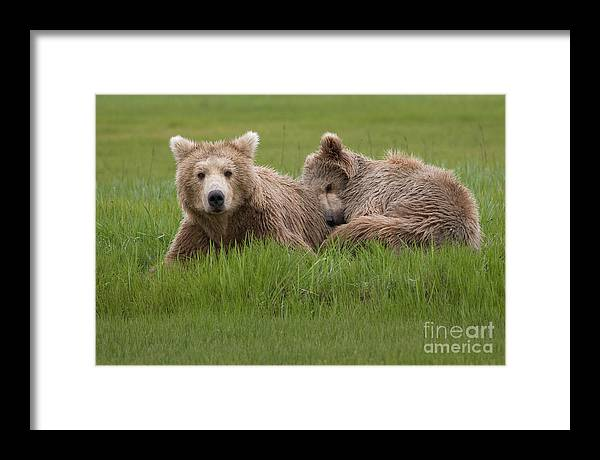 Alaska Framed Print featuring the photograph Momma And Cub by Greg Probst