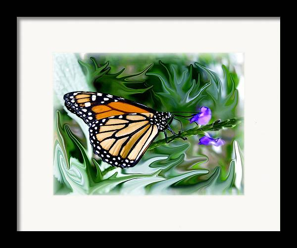 Monarch Butterfly Framed Print featuring the photograph Monarch Butterfly 4 by Jim Darnall