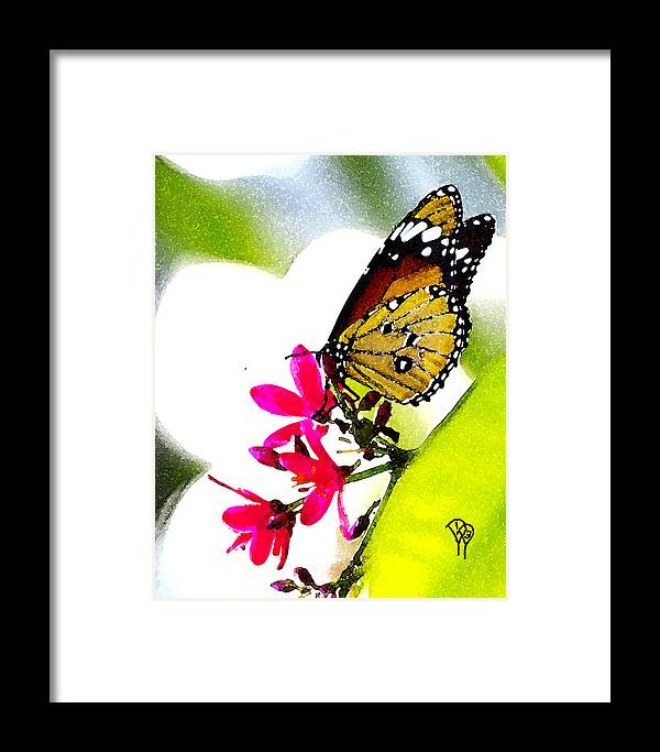 Framed Print featuring the photograph Monarch by Darcy Dietrich