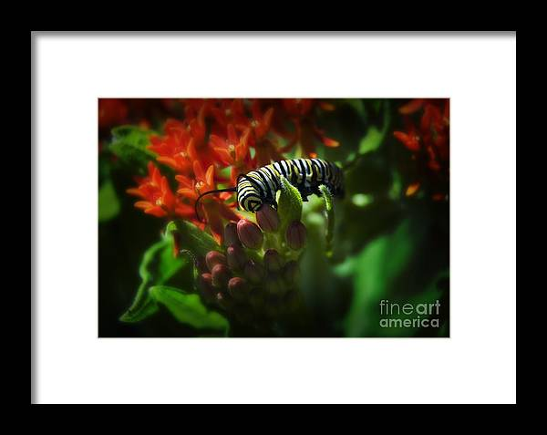 Kansas Framed Print featuring the photograph Monarch by Fred Lassmann