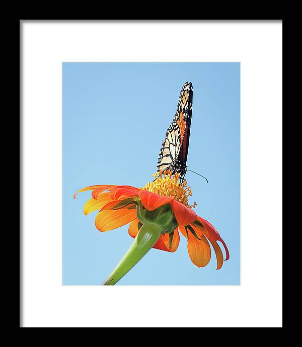 Award Winner Framed Print featuring the photograph Monarch I by Dawn Currie