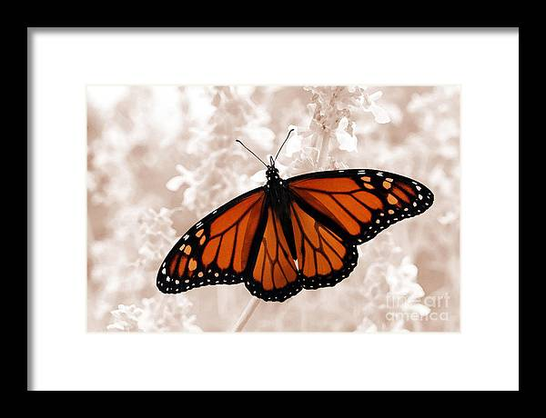 Monarch Framed Print featuring the photograph Monarch by Jeannie Burleson