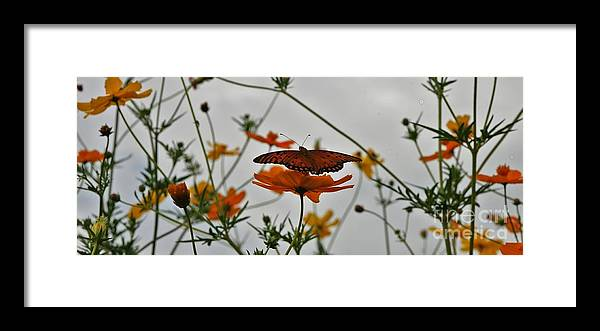 Monarch Butterflies Framed Print featuring the photograph Monarch on the River by Leon Hollins III