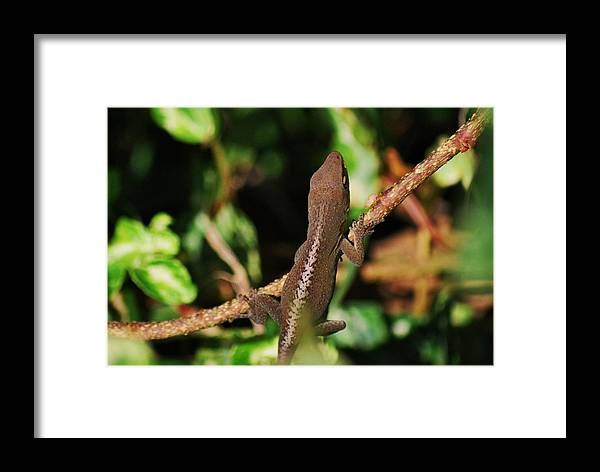 Anole Framed Print featuring the photograph Monkey Liz by Trudi Southerland