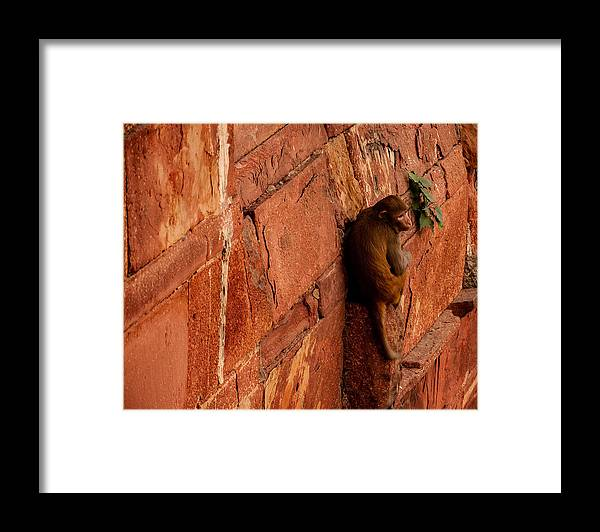 Monkey Framed Print featuring the photograph Monkey by M G Whittingham