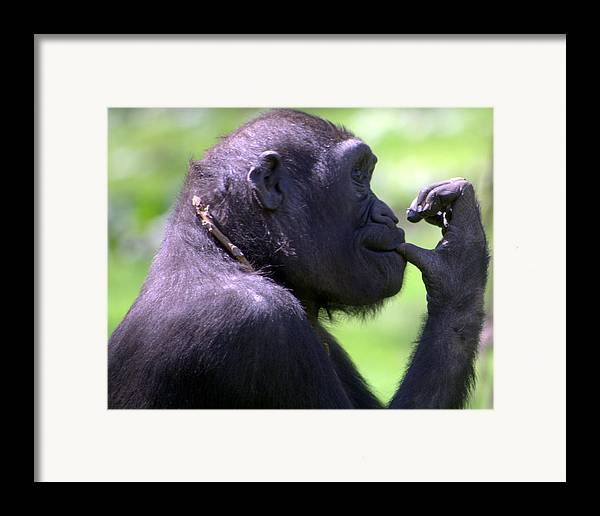 Monkey Framed Print featuring the photograph Monkey Thinking by April Holgate