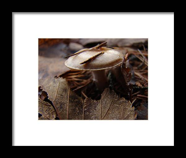 Ontario Framed Print featuring the photograph Mono Macro by Tingy Wende