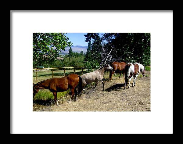 Horse Framed Print featuring the photograph Montana Horses by Ralph Perdomo