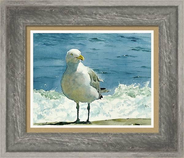 Montauk Gull by Tom Hedderich