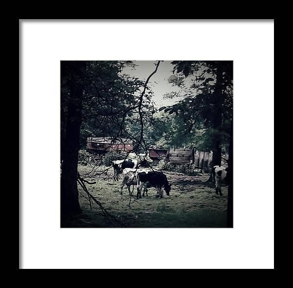 Cows Framed Print featuring the photograph Moo by Sheryl Eisner