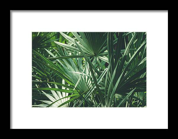 Green Framed Print featuring the photograph Moody Tropical Leaves by Andrea Anderegg