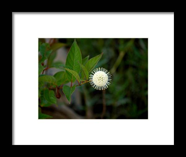 Flower Framed Print featuring the photograph Moon by Aline Kala