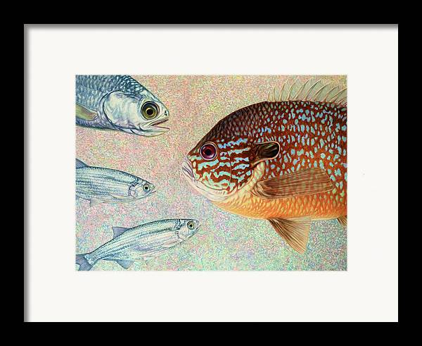 Fish Framed Print featuring the painting Mooneyes, Sunfish by James W Johnson