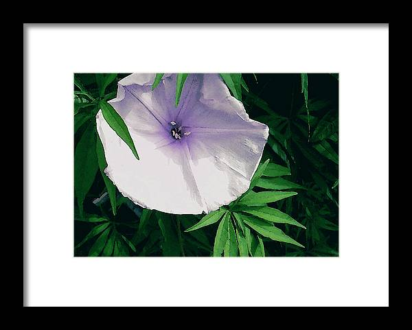 James Temple Framed Print featuring the photograph Hawaiian Morning Glory by James Temple