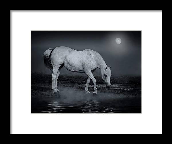Horse Framed Print featuring the photograph Moonlight Shadow by Joachim G Pinkawa