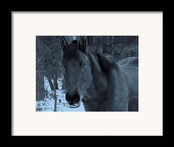 Horse Framed Print featuring the photograph Moonlit Stallion by Tiffany Vest