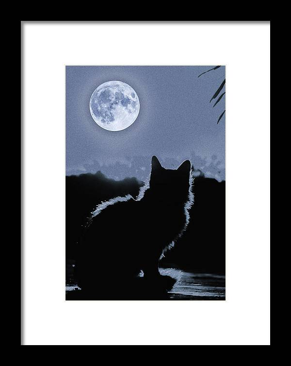 Cat Framed Print featuring the digital art Moonstruck by Al G Smith