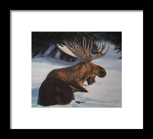 Moose Lying In Snow Watercolour Framed Print featuring the painting Moose In Winter by Susan Tilley