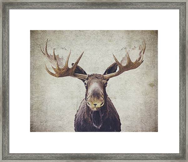 Moose Framed Print By Nastasia Cook