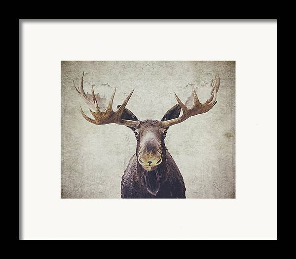 Moose Framed Print featuring the photograph Moose by Nastasia Cook