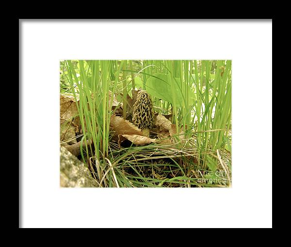 Morel Framed Print featuring the photograph Morel Mushroom by Angie Rea