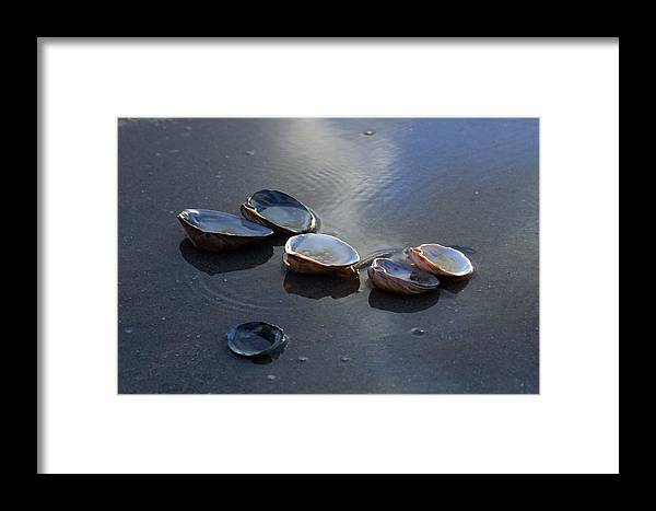 Shells Framed Print featuring the photograph Morniing Clams II by Mary Haber