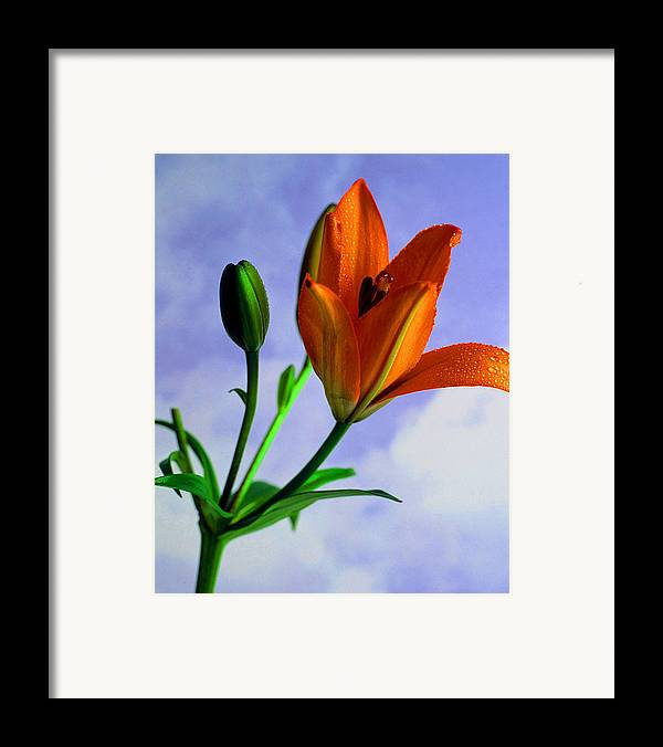 Flower Framed Print featuring the photograph Morning Bloom by Dennis Hammer