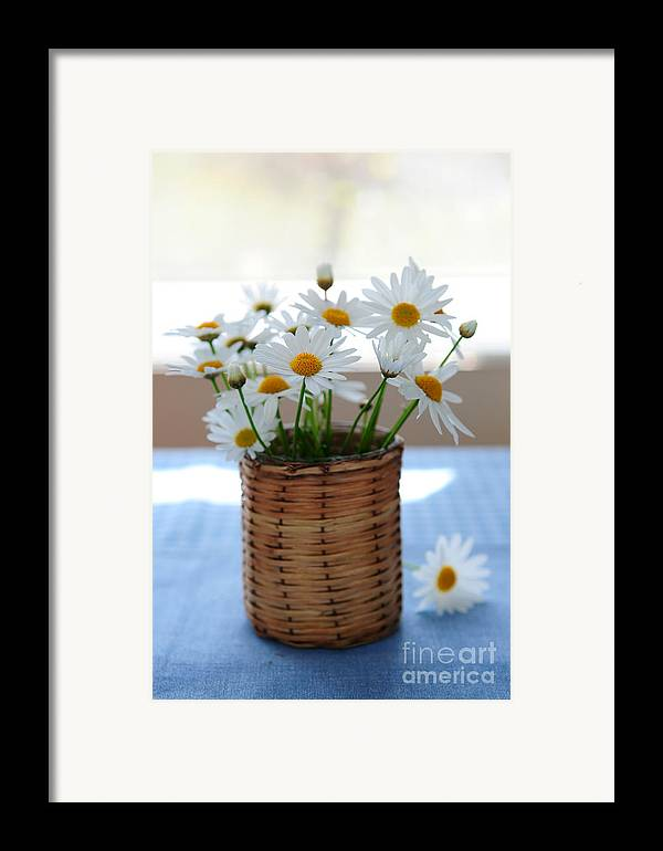 Daisy Framed Print featuring the photograph Morning Daisies by Elena Elisseeva