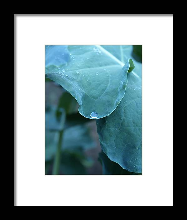 Green Framed Print featuring the photograph Morning Dew Drops by Robert Gebbie