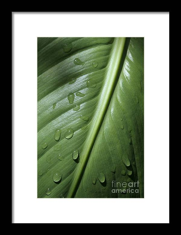 Leaf Framed Print featuring the photograph Morning Dew by Jeannie Burleson