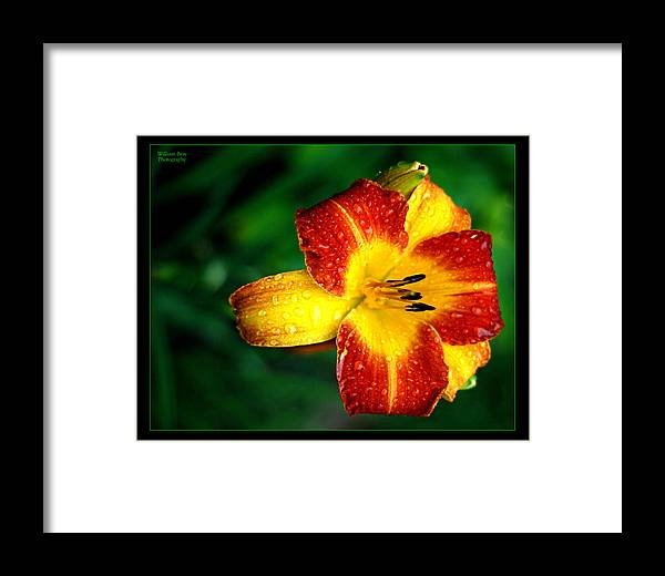 Floral Framed Print featuring the photograph Morning Dew by William Bray