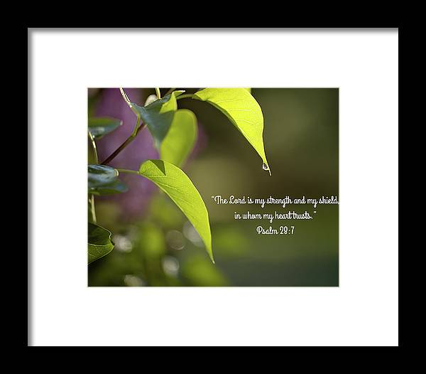 Dew Framed Print featuring the photograph Morning Dewfall by Sara Martin