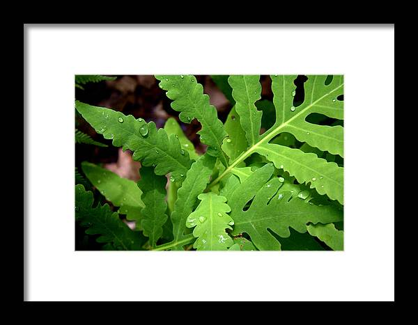 Nature Framed Print featuring the photograph Morning Ferns by Eldon Roberts