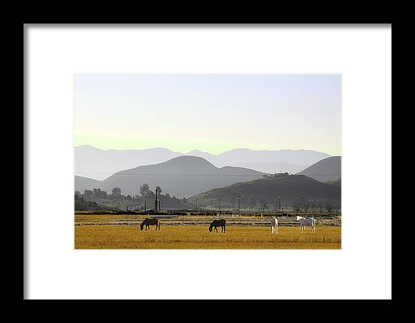 Morning In Country Framed Print featuring the photograph Morning In Country by Viktor Savchenko
