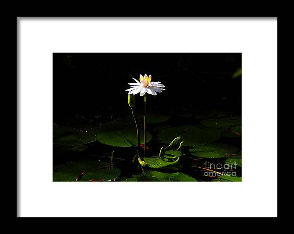 Morning Framed Print featuring the photograph Morning Glory by David Lee Thompson