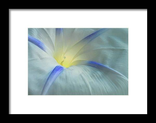 Morning Glory Framed Print featuring the photograph Morning Glory by Gene Sizemore