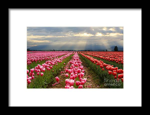 Skagit Framed Print featuring the photograph Morning Has Broken by Beve Brown-Clark Photography