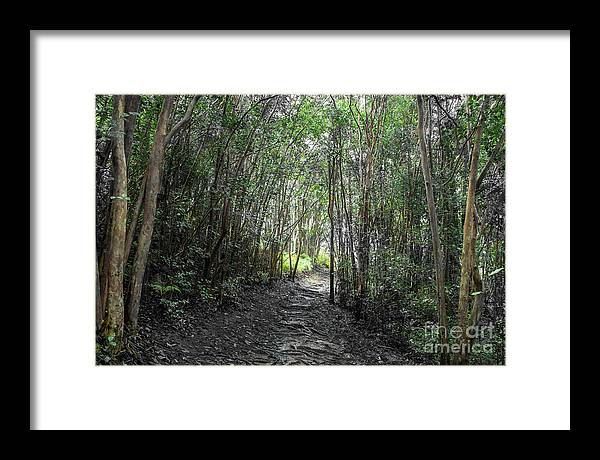 Maui Framed Print featuring the photograph Morning Hike On Waihee by RJ Bridges