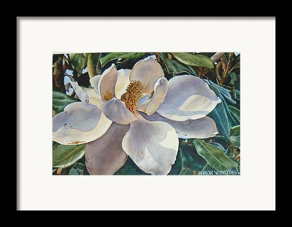 Flower Framed Print featuring the painting Morning Magnolia by Marion Hylton