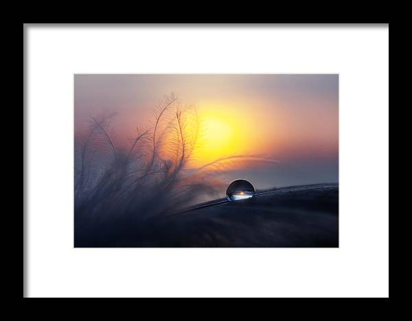 Drop Framed Print featuring the photograph Morning by Peep Loorits